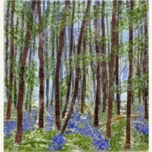 Spring Woodland 2