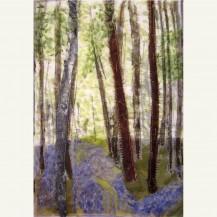 Spring Woodland 6