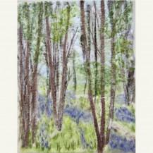Spring Woodland 3