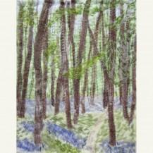 Spring Woodland 4