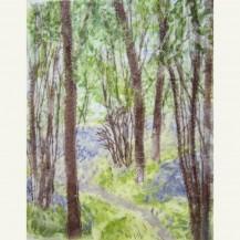 Spring Woodland 5