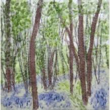 Spring Woodland 7